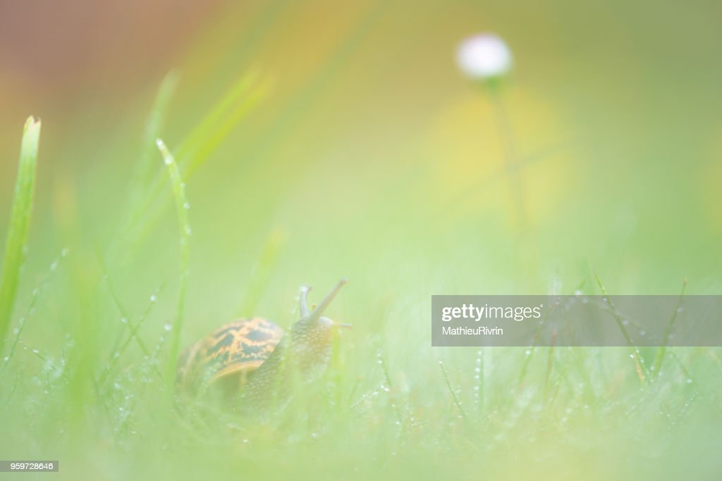Microcosmos, macrophotography of snail and flowers : Stock-Foto
