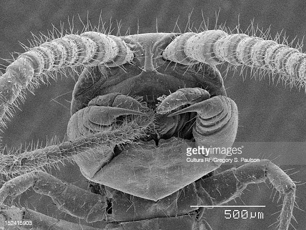 sem micrograph of a centipede head - centipede stock pictures, royalty-free photos & images