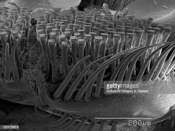 sem micrograph of a legs of a diving beetle - diving beetle stock pictures, royalty-free photos & images