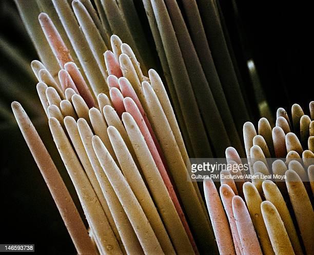 SEM Micrograph of tooth brush bristles