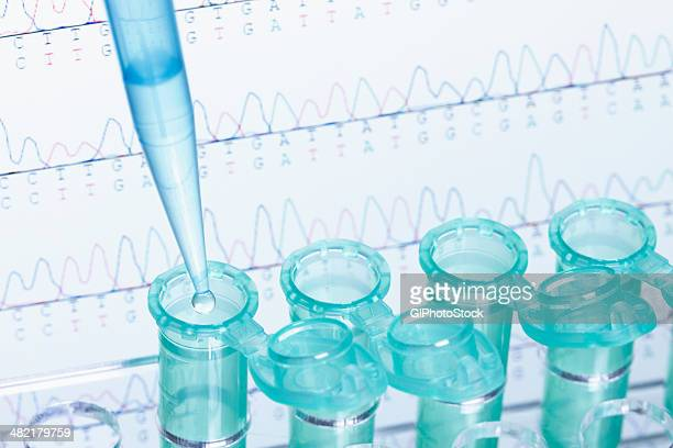 micropipette and eppendorf microcentrifuge tubes, dna sequencing in background - medical test stock pictures, royalty-free photos & images