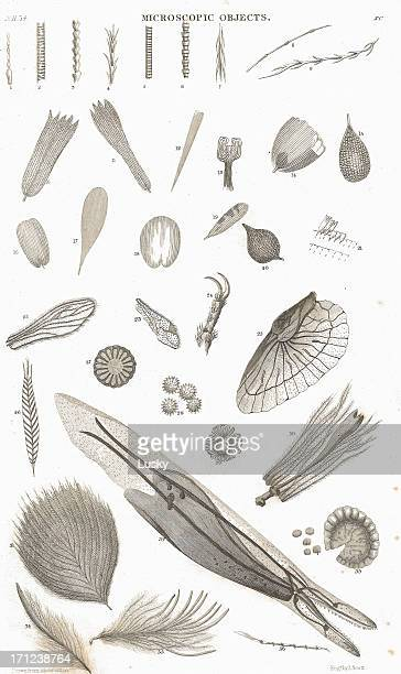 microscopic objects old litho print from 1852 - lithograph stock pictures, royalty-free photos & images