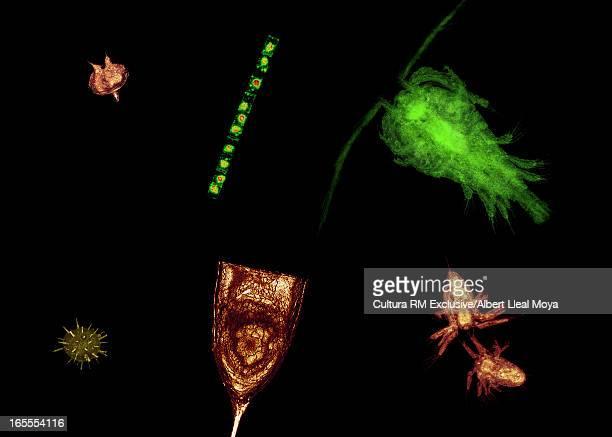 Microscopic view of plankton