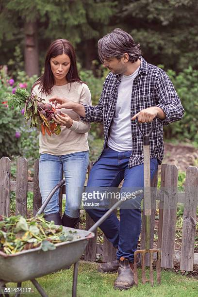 Mid adult couple examining freshly harvested carrots and beets at organic farm