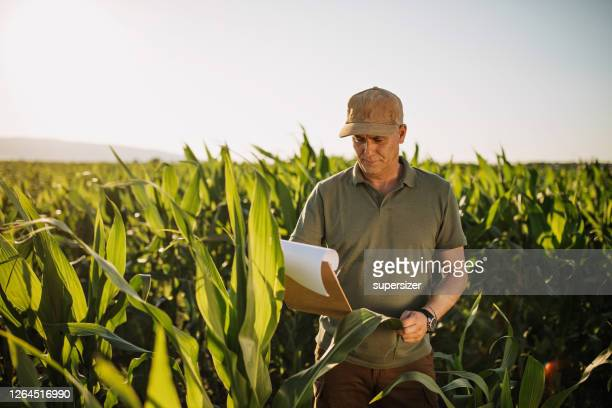mid adult farmer inspects his land - agronomist stock pictures, royalty-free photos & images