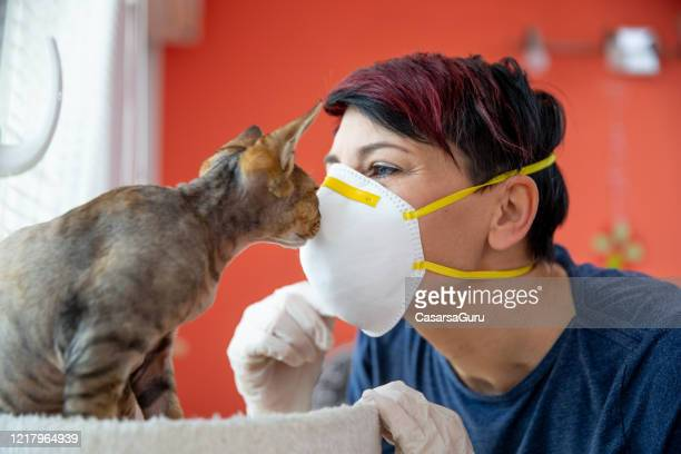 mid adult female pet owner kissing her cat with protective mask during coronavirus pandemic - stock photo - cat face mask stock pictures, royalty-free photos & images