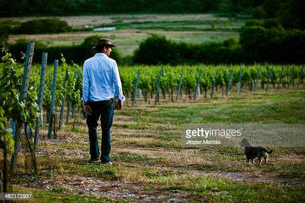 Mid adult man and dog monitoring wine and champagne vineyard, Cottonworth, Hampshire, UK