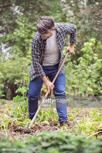 Mid adult man raking vegetable garden