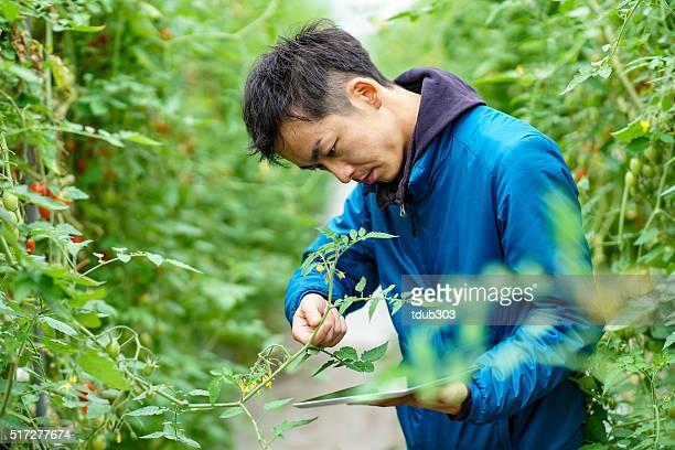 Mitte Erwachsener Mann mit kabelloser Technik in die Landwirtschaft