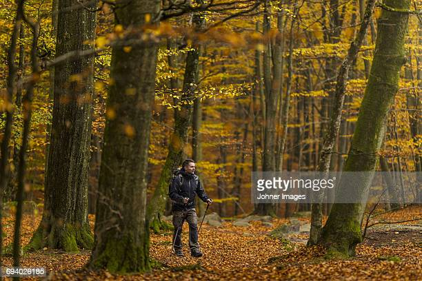 Mid adult man walking through forest