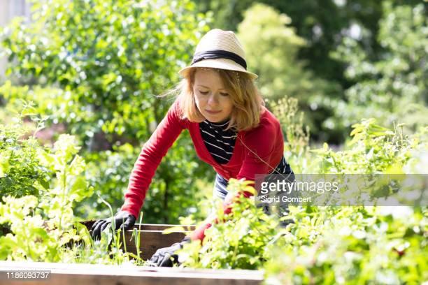 mid adult woman checking plants in raised beds in her garden - sigrid gombert stock-fotos und bilder