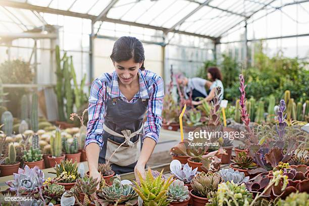 Mid adult woman examining plants in greenhouse