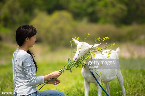 Mid femme adulte manger son animal de compagnie à la ferme biologique de chèvre