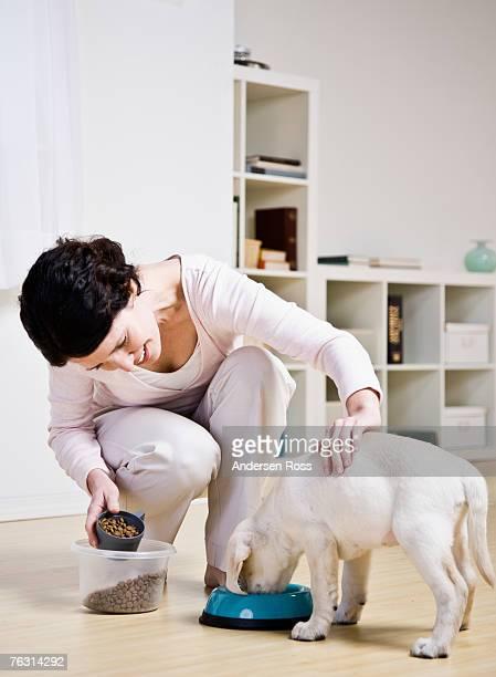 Mid adult woman feeding puppy labrador in room