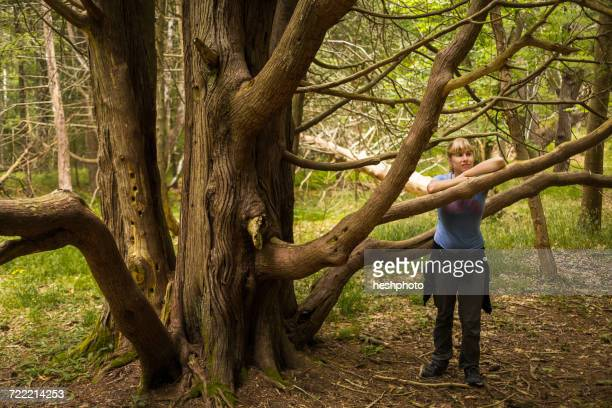 mid adult woman leaning against tree branch in forest, maine, usa - heshphoto stockfoto's en -beelden
