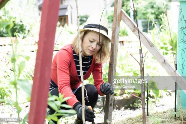 mid adult woman planting in her garden, selective focus - sigrid gombert photos et images de collection