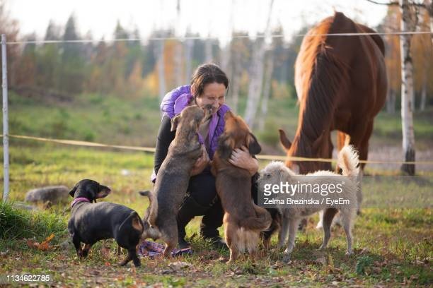 mid adult woman playing with dogs while crouching on grassy field - 家畜 ストックフォトと画像