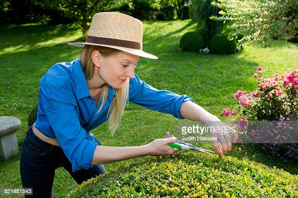 Mid adult woman pruning perfect hedge in garden