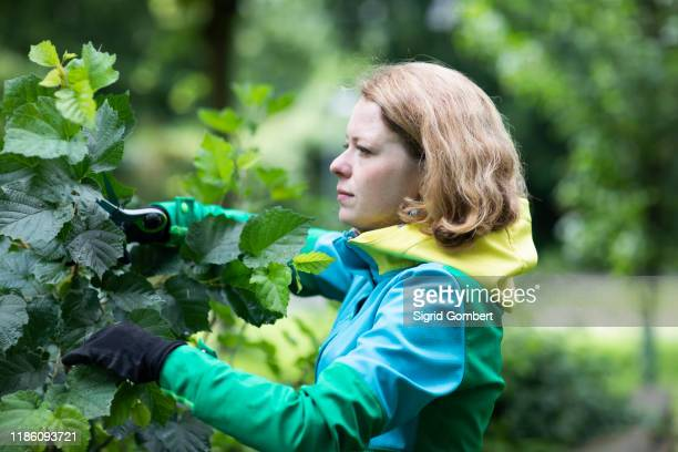 mid adult woman pruning tree in her garden, shallow focus - sigrid gombert stock pictures, royalty-free photos & images