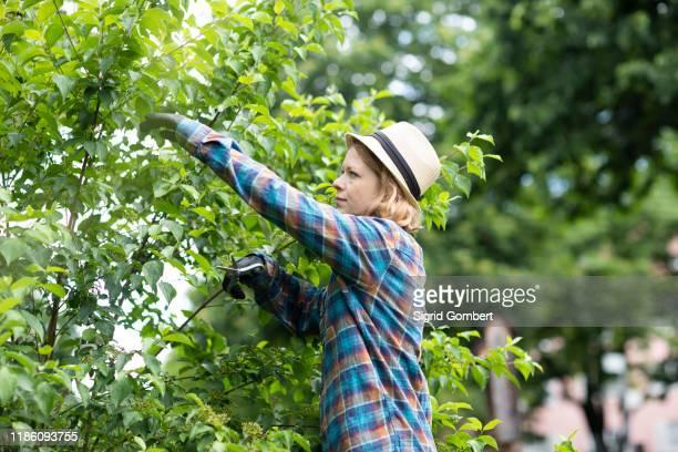 mid adult woman pruning tree in her garden, side view - sigrid gombert stock-fotos und bilder