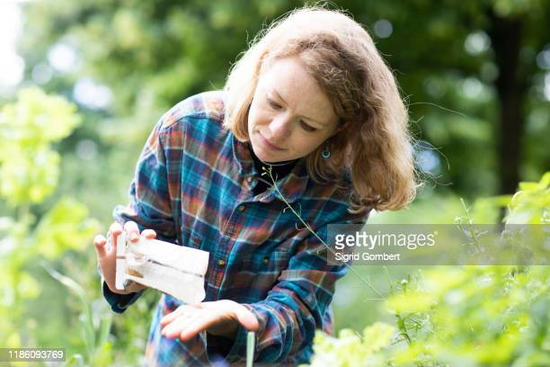 mid adult woman selecting seeds to plant in her garden - sigrid gombert stock pictures, royalty-free photos & images