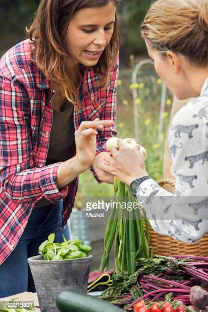 Mid adult woman selling scallions to female customer at vegetable garden