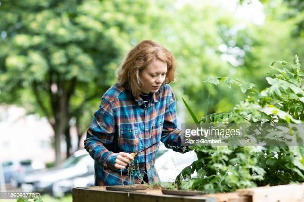 mid adult woman tending plant in her garden - sigrid gombert stock-fotos und bilder
