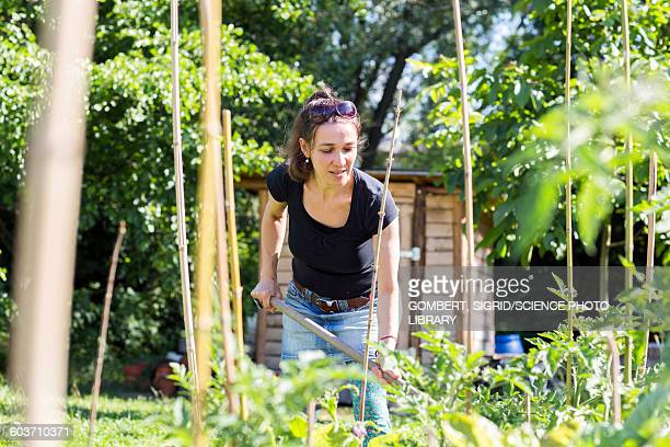 mid adult woman working in the garden - sigrid gombert stockfoto's en -beelden