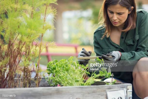 Mid adult woman writing label for plant in urban garden