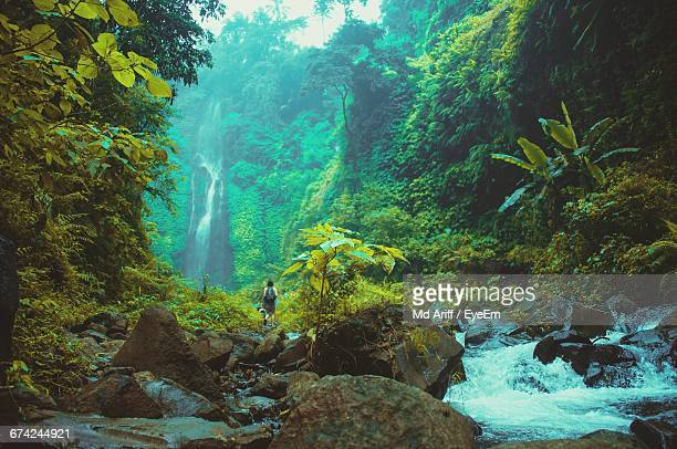 mid distance of hiker walking on rocks by rain forest - lush stock pictures, royalty-free photos & images