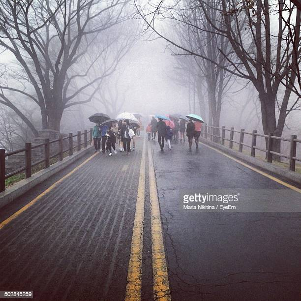 mid distance shot of people with umbrellas walking along bare trees - nikitina stock pictures, royalty-free photos & images