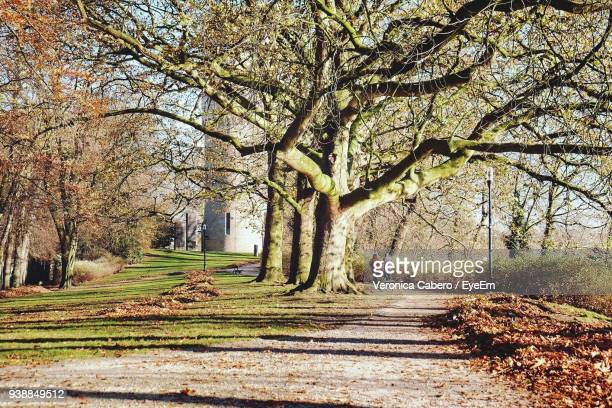 mid distance view of people walking at park during autumn - veronica gentili foto e immagini stock