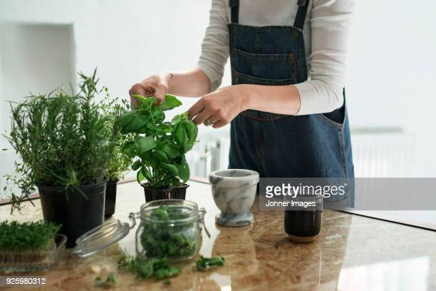 mid section of person cutting herbs - spice stock pictures, royalty-free photos & images