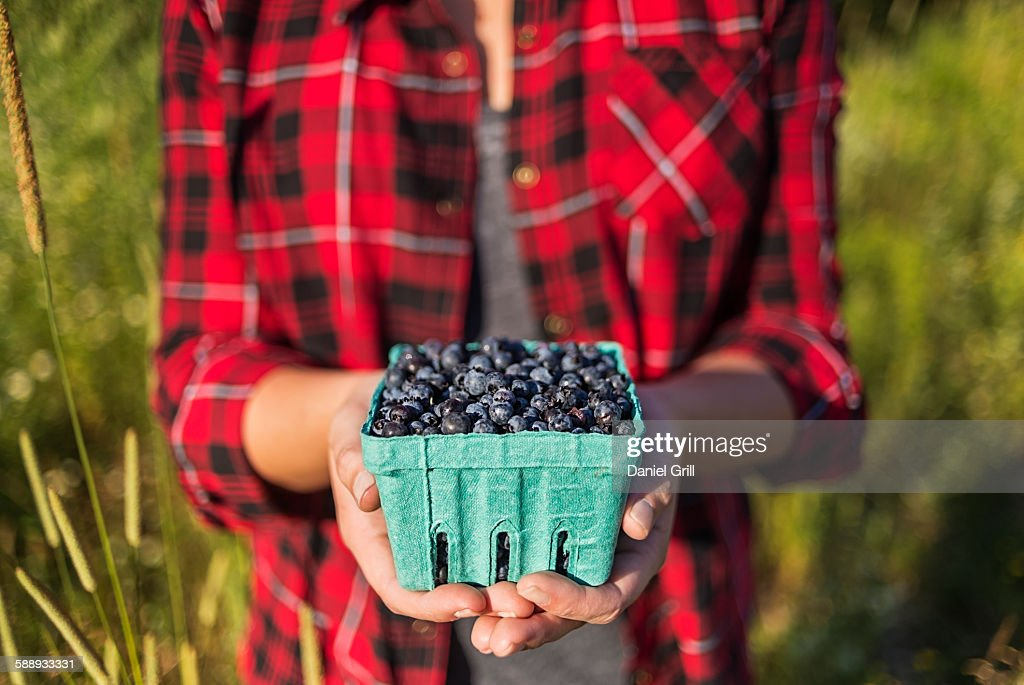 Mid section of woman holding punnet of blueberries : Stock Photo