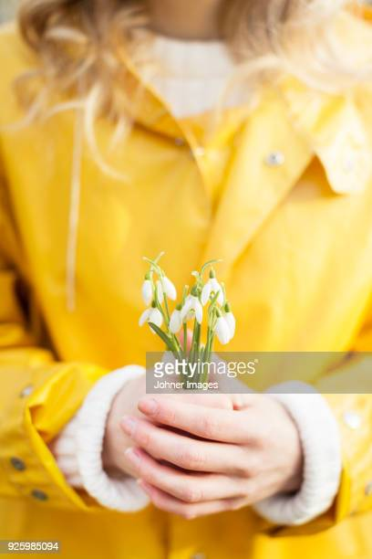 mid section of woman in yellow raincoat holding snowflakes flower - snowdrop stock pictures, royalty-free photos & images