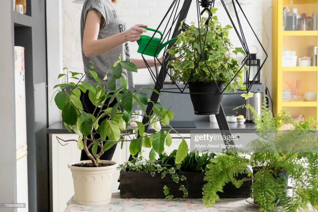 Mid section of woman watering hanging ivy plant in kitchen : Stock Photo