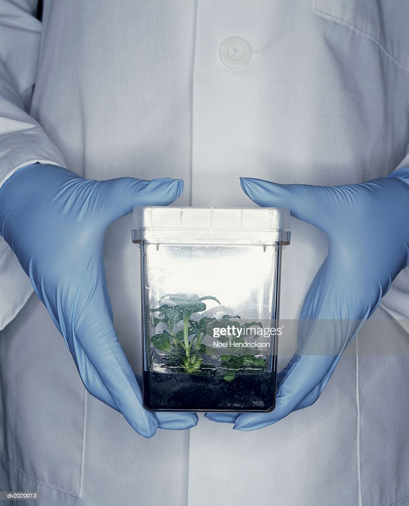 Mid Section Shot of a Scientist Holding a Container Containing a Plant Sample : Stock Photo