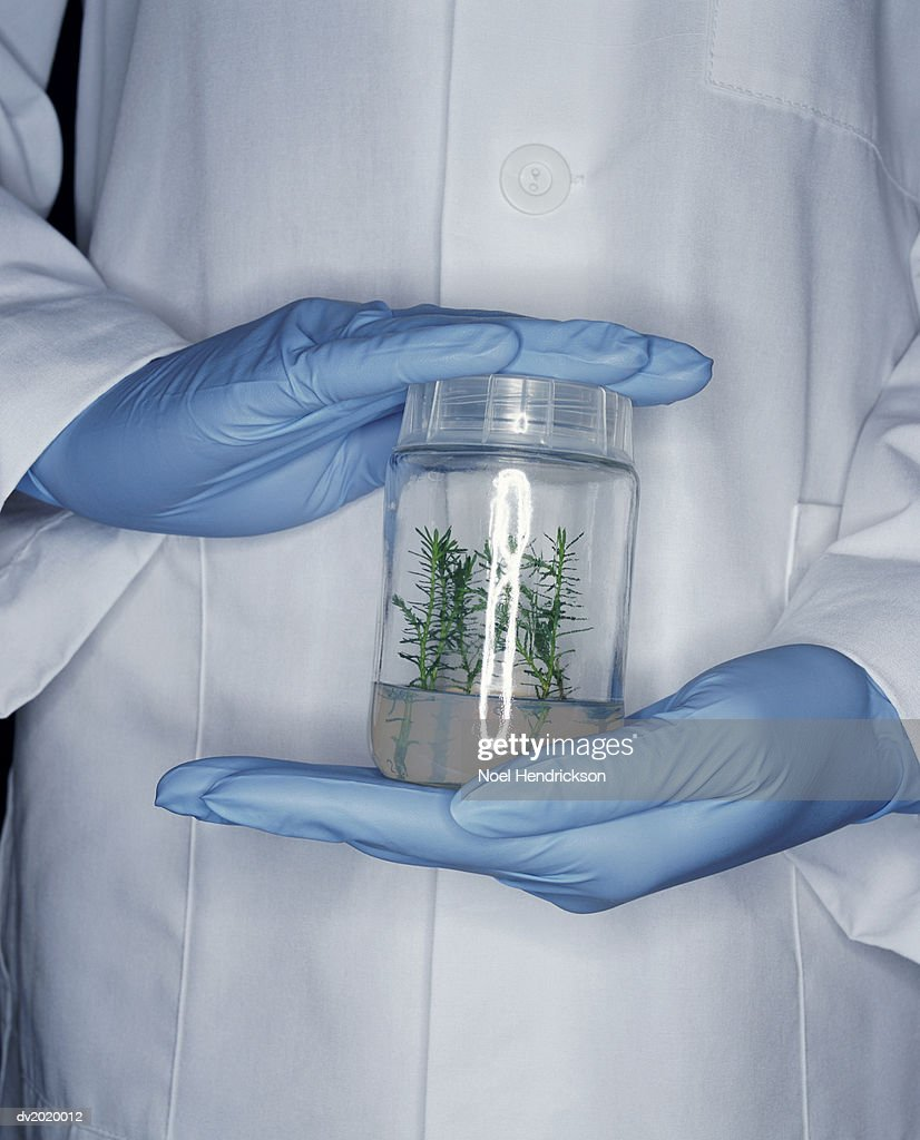 Mid Section Shot of a Scientist Holding a Jar Containing a Seedling : Stock Photo