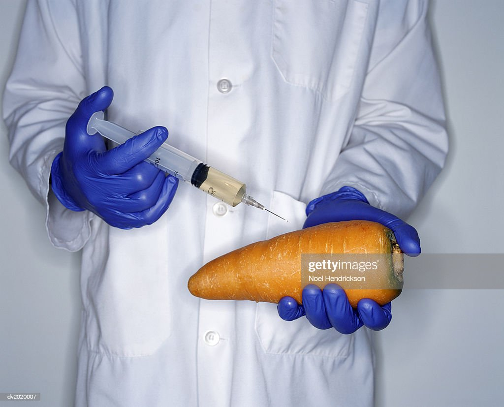 Mid Section Studio Shot of a Scientist Injecting a Large Carrot with a Syringe : Stock Photo