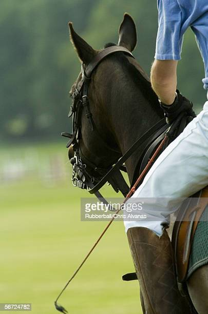 Mid section view of a polo player