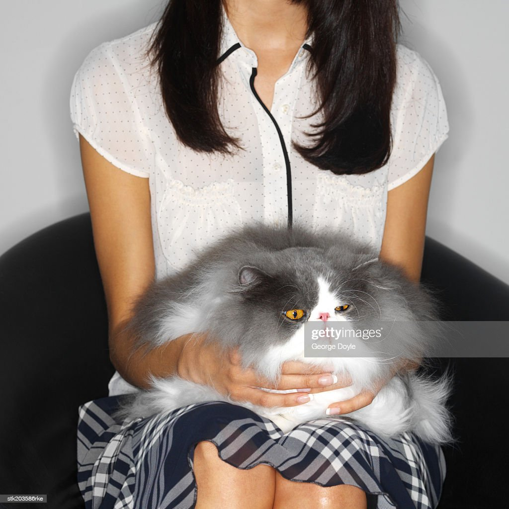 mid section view of a woman sitting with a cat in her lap : Stock Photo