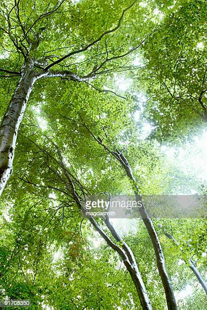midday in forest - magdasmith stock pictures, royalty-free photos & images
