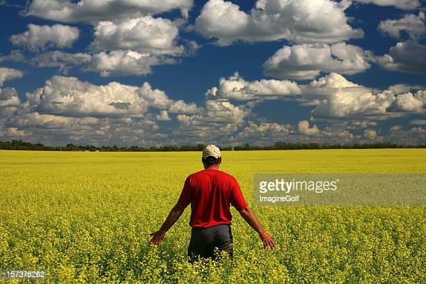 Milieu âgé Caucasien agriculteur dans le champ de colza jaune