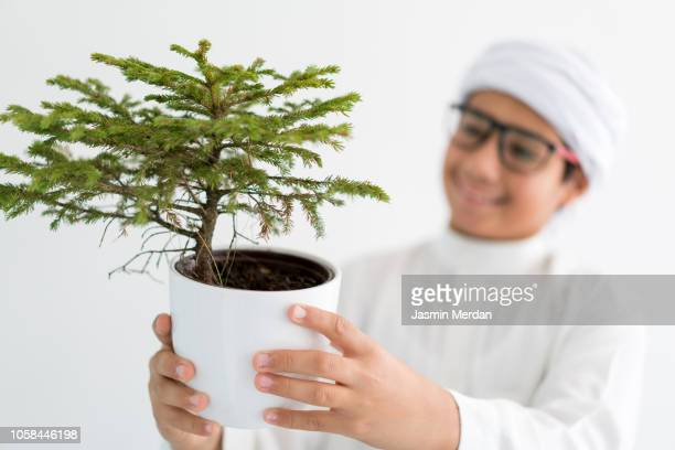middle eastern boy with tree in pot - riyadh stock pictures, royalty-free photos & images