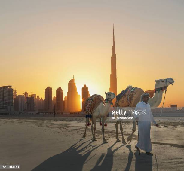 Middle Eastern man walking camels near city