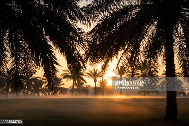 middle eastern morning - bahrain stock pictures, royalty-free photos & images