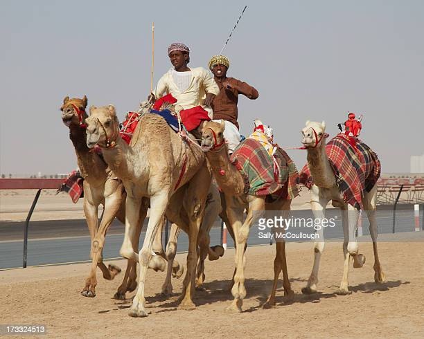 CONTENT] Middle Eastern trainers warming up their camels to prepare for a race at the Al Marmoum Race Track in Dubai on Sunday 24th February 2013