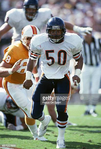 Middle Linebacker Mike Singletary of the Chicago Bears in action against the Tampa Bay Buccaneers during an NFL football game circa 1988 at Tampa...