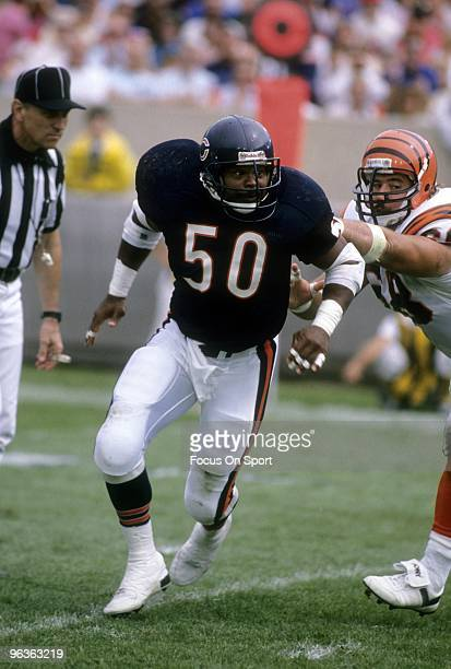Middle Linebacker Mike Singletary of the Chicago Bears in action against the Cincinnati Bengals during a NFL football game September 10 1989 at...