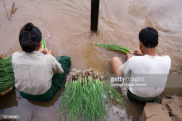 CONTENT] A middleage Burmese couple with their legs in the water washing vegetables on the shore of the river Hsipaw Shan State Myanmar